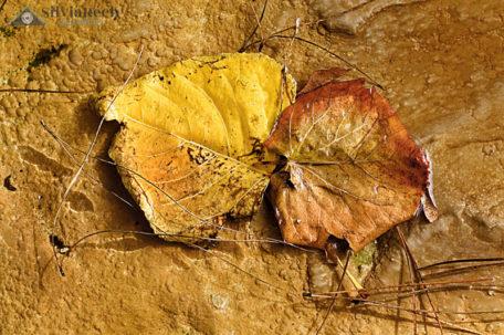 Fotografia foglie