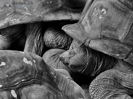 Fotografia tartarughe